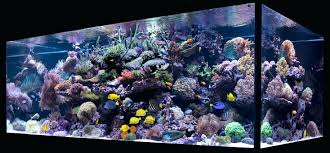 led reef lighting reviews best reef aquarium lighting reef aquarium led spectrum aokpharm info