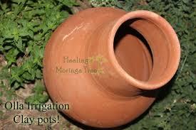 terracotta pots buy irrigation garden olla clay pots moringa trees for sale