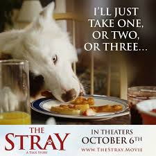 Dog Food Meme - movie review the stray opening on october 6 2017 how a stray