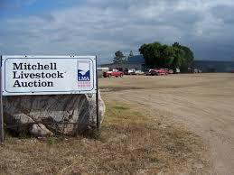 Bloomfield Sale Barn Mitchell Sale Barn Under New Ownership Tsln Com