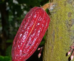 medicinal and ritualistic uses for chocolate in mesoamerica
