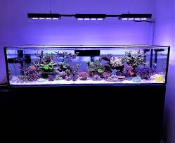 Aquascape Reef 300 Best Reefscapes Images On Pinterest Saltwater Aquarium Reef