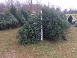 local christmas tree farm christmas 2017 and tree