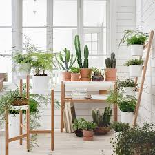 best 25 satsuma ikea ideas on pinterest plants in the home