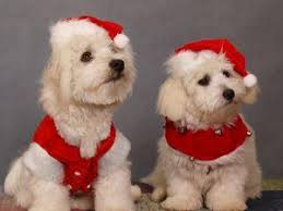 dog christmas cards dog breed christmas cards