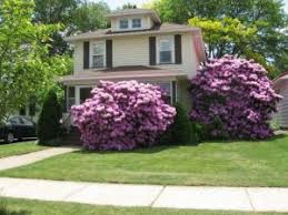 architecture white flowers red roses front yard garden ideas