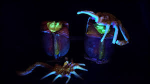halloween recipe alien facehugger pudding cups eat the dead