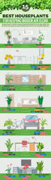 best house plants infographic 15 best houseplants for keeping indoor air clean