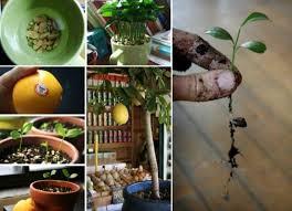 212 best indoor plants images on pinterest gardening gardens
