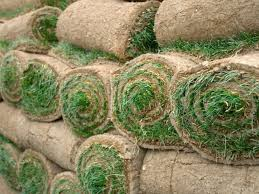 how to resod a lawn hgtv