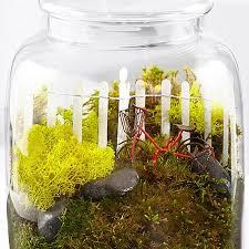 going for a ride moss terrarium