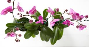 List Of Flowers by The Orchid Meaning U0026 History Behind This Exotic Flower