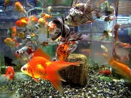 Aquarium Decor Ideas Tips To Decorate Fish Aquarium