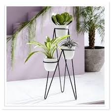 type of indoor plants very beautiful your house devparade