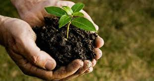 get your seedlings plant a tree clark county live