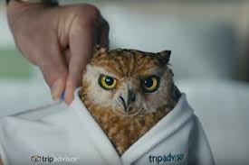 americas best owl commercial actress tripadvisor animates its owl and gives it british accent cmo