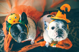 dog halloween costumes cute dog costumes you have to try