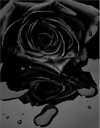 imagenes de flores negras naturales pin by rossy isidro on rosas negras pinterest