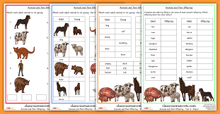 year 2 science animals and their young worksheets classroom secrets