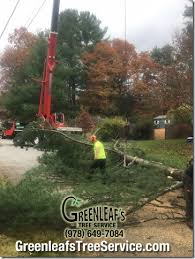 tree removal greenleaf s tree service