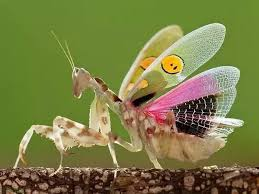 what are the black dots on the of the praying mantis quora