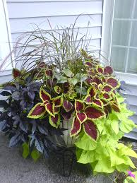 Plant Combination Ideas For Container Gardens Fall Plants For Container Gardening Container Gardening Plants