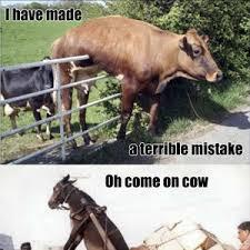 Stupid Animal Memes - stupid animals by kognak meme center