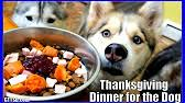 thanksgiving dinner for dogs happy thanksgiving