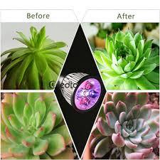 Small Desk Plants by Online Get Cheap Flower Desk Lamp Aliexpress Com Alibaba Group