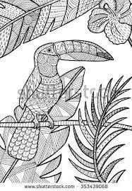 vector hand drawn toucan bird tropical stock vector 353439068