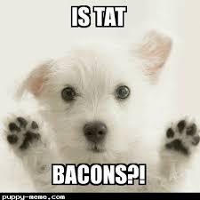 Dog Bacon Meme - 1471366139254 png