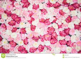 pink peonies gomi peonies pink peonies pink glamorous best 25 blush peonies ideas