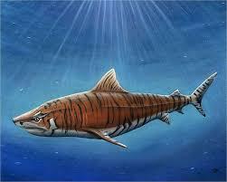 9 shark drawings free psd ai vector eps pdf format free