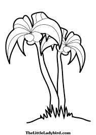 drawn palm tree coloring page pencil and in color drawn palm