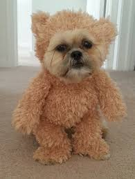 Halloween Costumes Yorkies Walking Teddy Bear Costume Dog Teddy