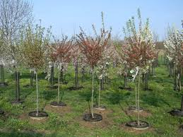 Landscape Nurseries Near Me by Shademakers Oxford Oh Landscaping Nursery Greenhouse Garden Center