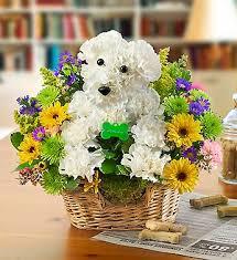 dog flower arrangement hw0 489241 jpg