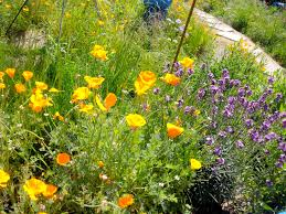california native plant garden our sunday open house was full of activity middlebrook center