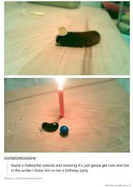 Birthday Meme Tumblr - caterpillar birthday party tumblr weknowmemes