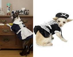 in costumes 15 hilarious dogs in costumes dog costumes dog costumes oddee