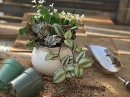 indoor plant arrangements indoor plant design combining houseplants for interesting