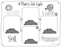 pictures on preschool plant life cycle activities wedding ideas