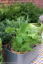 indoor herb gardens indoor herb planter hoosier homemade