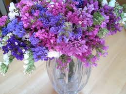 statice flowers 9 best statice images on bachelor button flowers