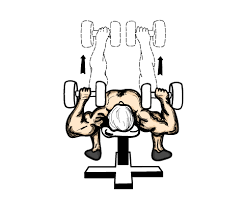 Bench Press Vs Dumbbell Press How To Get Past A Bench Press Plateau