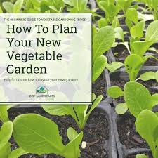 how to plan your new vegetable garden dgf landscapes mackay