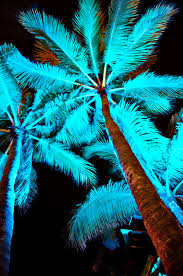 palm tree neon light neon light on palm trees ocean drive miami limewave flickr