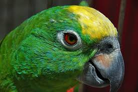 vital l full spectrum light for birds why parrots and birds need more than seed and pellets