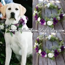 dog wedding dress outstanding dog wedding attire 31 for your cupcake wedding dress