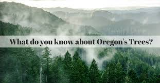 how much do you about oregon s trees northwest arbor